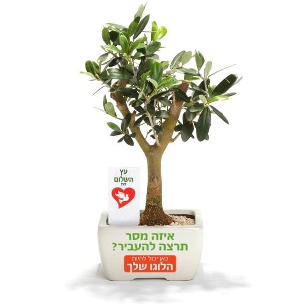 עץ זית ננסי ממותג